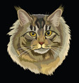 colored maine coon cat vector image