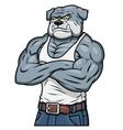 Strong muscle aggressive bulldog vector image vector image