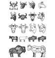 big set of cow heads and silhouettes design vector image