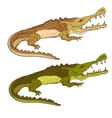 Crocodile green and brown cartoon image vector image
