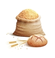 Bread And Grain 3d Concept vector image vector image