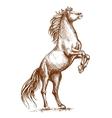 Brown horse rearing on hind hoof sketch portrait vector image vector image