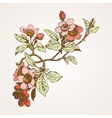 Cherry branches with flowers sakura vector image vector image