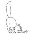 kitten playing vector image