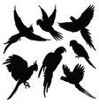 parrots amazon jungle birds silhouettes vector image