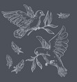 doves or pigeons with olive branches sketch or vector image vector image