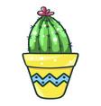 home cactus fleshy green succulent decorative vector image vector image