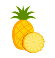 isolated pineapple fruit vector image