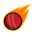 sport ball fire cricket vector image vector image