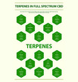 terpenes in full spectrum cbd with structural vector image vector image