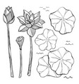 sketch set of flowers and leaves of the vector image