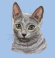 colorful russian blue cat vector image