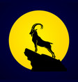 ibex standing on the cliff mountain goat vector image vector image