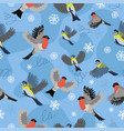 seamless pattern with bullfinches and titmouse vector image vector image