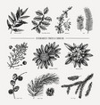 evergreen trees and shrubs collection vintage chr vector image vector image