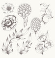 flower set hand drawing vector image vector image