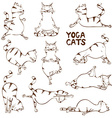 Funny sketch cat doing yoga position vector image vector image