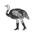 ostrich in high boots animal engraving vector image vector image