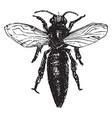 queen bee vintage vector image