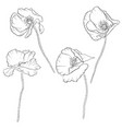 set drawing poppy flowers vector image