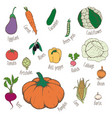 colorful hand drawn eco food set vector image vector image