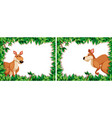 set of kangaroo in nature frame vector image vector image