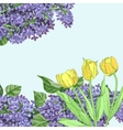 Background with yellow tulips and lilac vector image vector image
