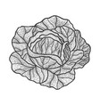 cabbage sketch engraving vector image