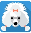 dog Poodle icon flat design vector image