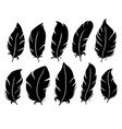 feather silhouette bird wing feathers lung quill vector image