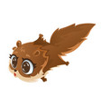 flying squirrel cartoon vector image vector image