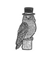 owl in top cylinder hat sketch vector image vector image