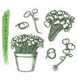 sketch watercress salad plant herbal food set vector image