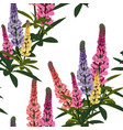 summer spring wild lupines flowers vector image