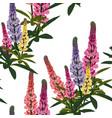Summer spring wild lupines flowers