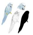bird parakeet budgerigar blue pet parakeet vector image vector image
