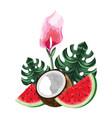coconut fruit cartoon vector image