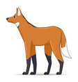 maned wolf animal standing on a white background