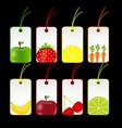 fresh fruits labels vector image vector image