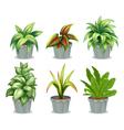 Green leafy plants vector image