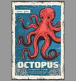 marine red octopus underwater monster vector image