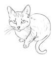 sketch of cat vector image