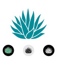 blue agave plant silhouette vector image