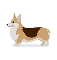 cute corgi icon small playful dog with short paws vector image vector image
