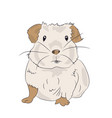 guinea pig color vector image