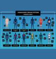 human body infographics vector image