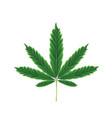 marijuana leaf vector image vector image