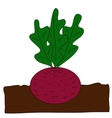 Planting beet vector image