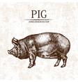 digital detailed pig hand drawn vector image
