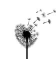 Silhouette dandelion Stock vector image vector image